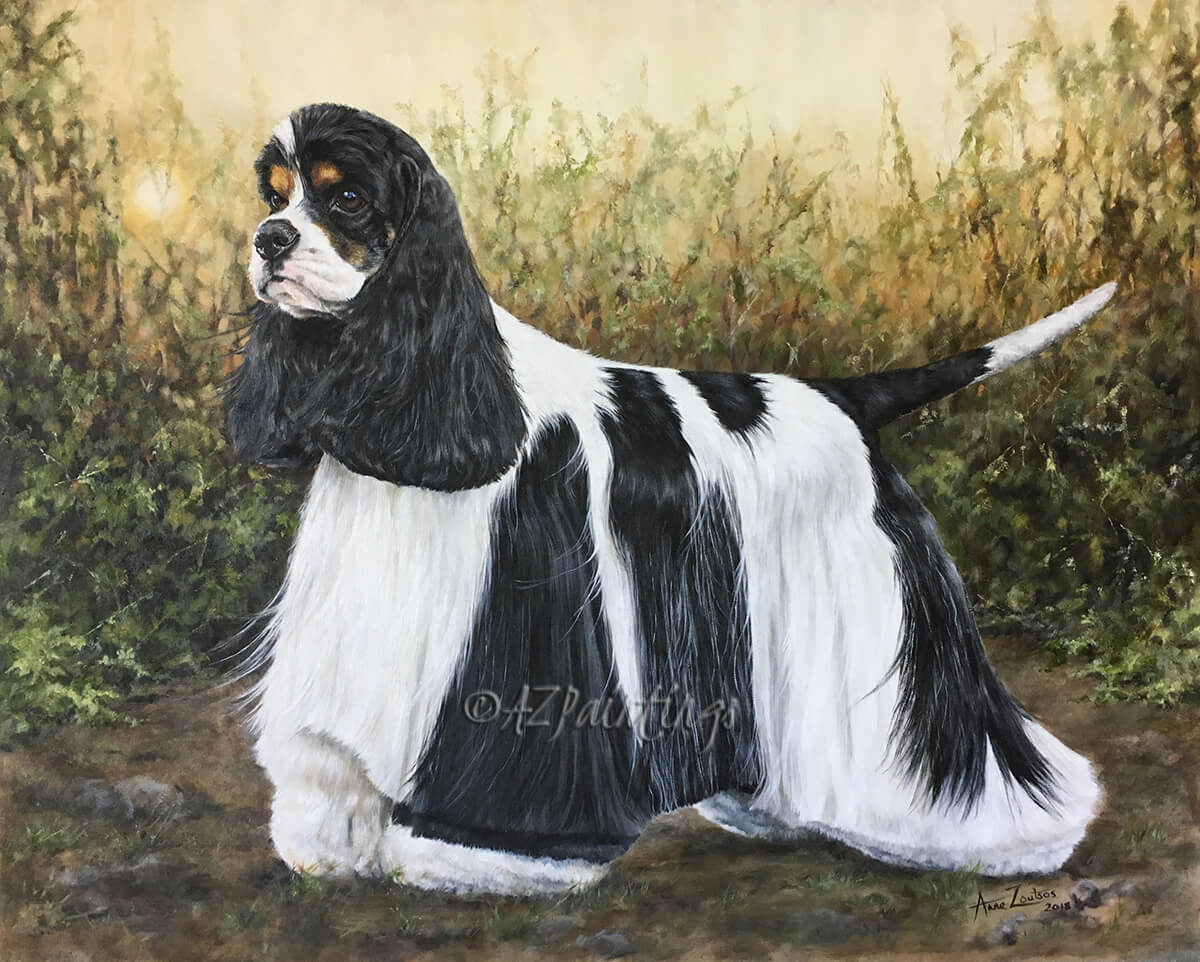 American Cocker Spaniel, Sh Champion Afterglow Miami Ink