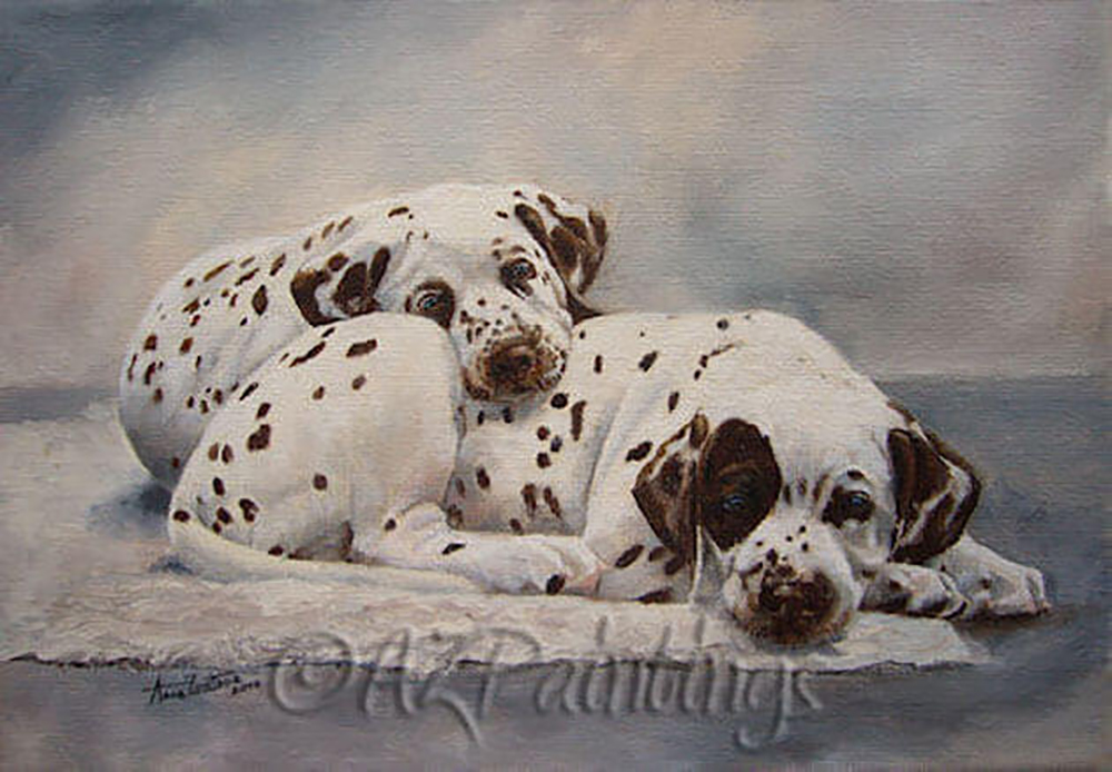 Two liver spotted Dalmatian puppies lie cuddling each other