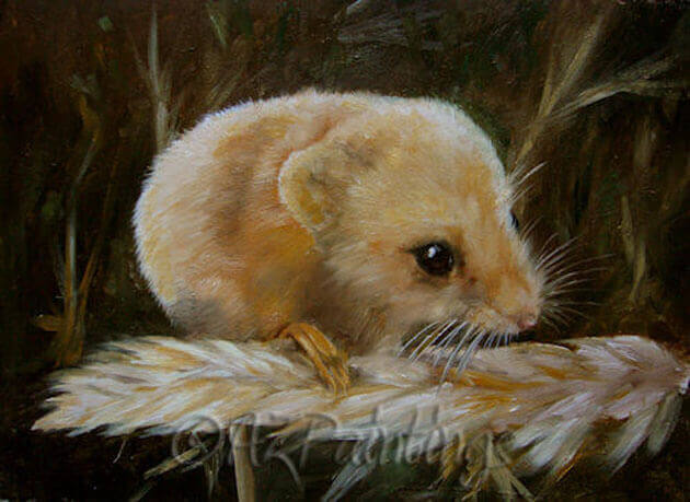 Harvest Mouse - an oil painting of a harvest mouse