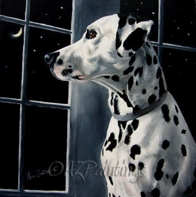 A Dalmatian gazes through the window at the moon