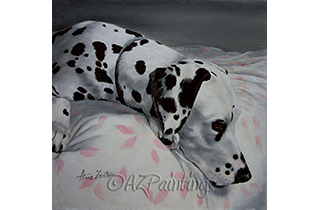 A Dalmatian lies calmly on a bed