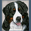 Bernese Mountain Dog - Sanmarwell American Pie ShCM
