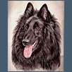 Belgian Shepherd Dog - Ch Ebontide Nexus for Lykos JW