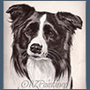 Border Collie - Sh Ch Tonkory Palmerston at Fayken JW