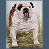 Bulldog - Ch Shiloh Patchwork of Kismond