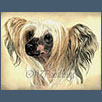 Chinese crested - Blandora Glory Be For Kilnshena