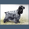 Cocker Spaniel - Sh Ch Wiljana Moonlight