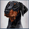 Dobermann -  Ch Amazon Dark Angel
