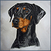 Dobermann - Janzins Jamelia