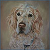 English Setter - Spencer
