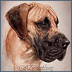 Great Dane - Ch Selmalda Check The Meaning JW