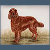 Irish Setter - Kiltimagh Clouded Dreams UD