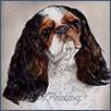 King Charles Spaniel- Fr Int Bel  Lux Dutch Ger and Fin Ch Lili de Melkrin