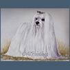 Maltese Terrier - Ch Am Can Esp Gib NL Int Ch Lafford Hershey's Kisses ShCM
