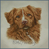 Nova Scotia Duck Tolling Retriever - Quoygard The Power of Dreams