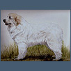 Pyrenean Mountain Dog - Ch Shiresoak Magica Star At Kalkasi JW