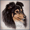 Shetland Sheepdog - Felthorn Indelible