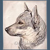 Swedish Vallhund - Ch Castleavery Silver Secret Under Mystarz